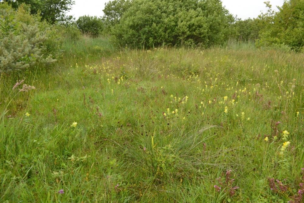 Cirsio dissecti - Schoenetum nigricantis